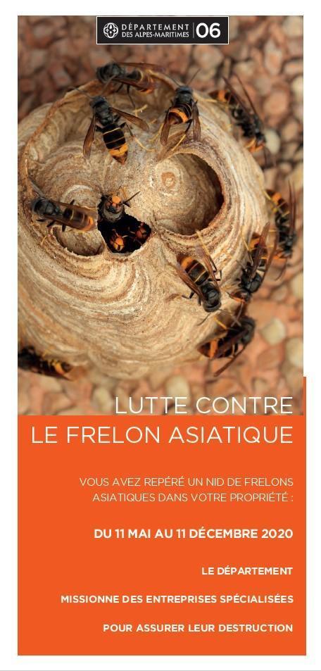 Frelon asiatique 1